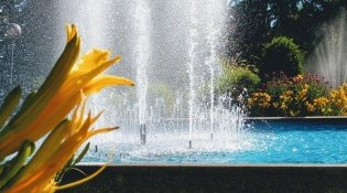 Yellow flower in front of fountain