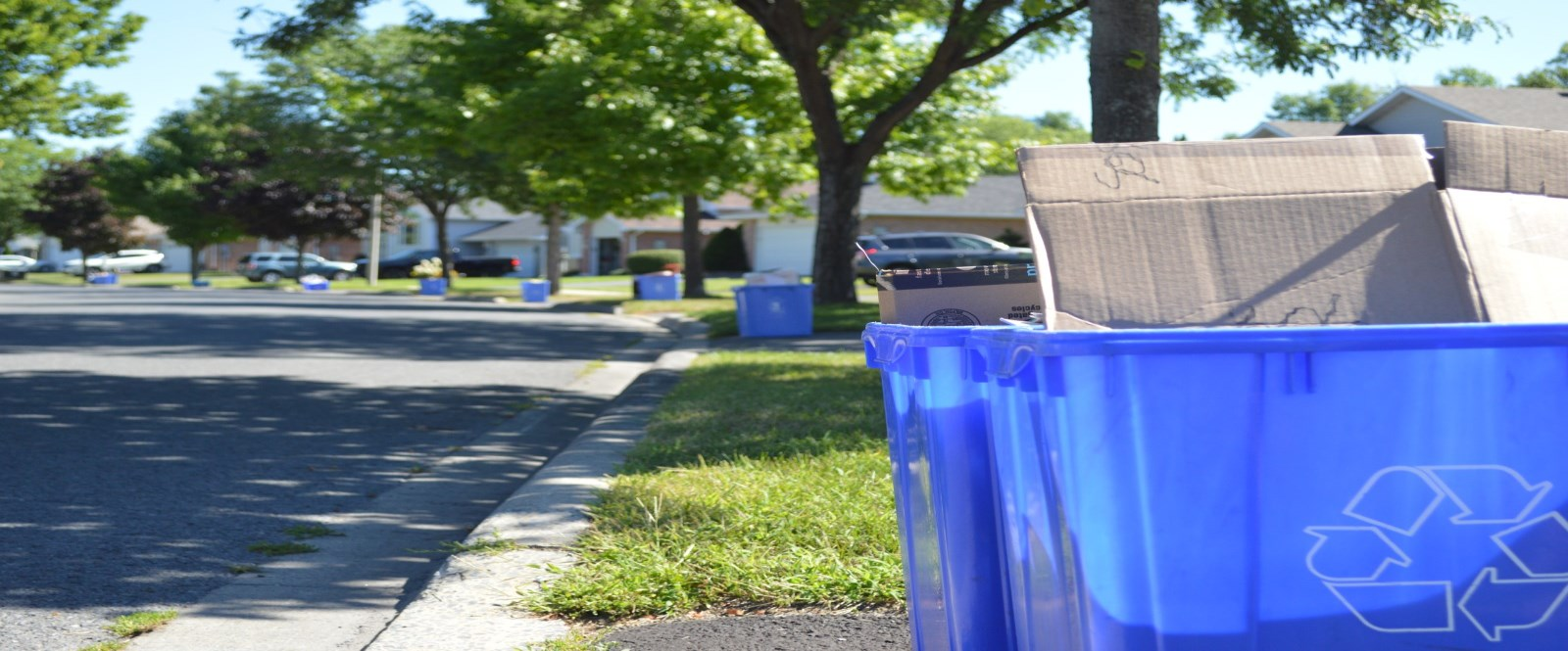 Blue recycling bins along residential Cornwall street